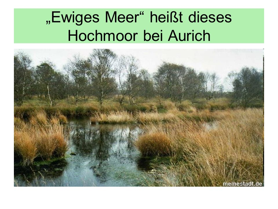Ewiges Meer heißt dieses Hochmoor bei Aurich