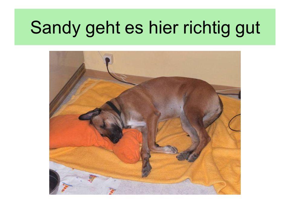 Sandy geht es hier richtig gut