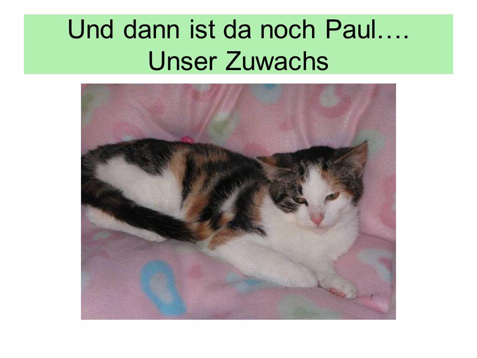 Und dann ist da noch Paul…. Unser Zuwachs