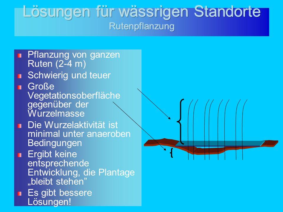 Pflanzung von ganzen Ruten (2-4 m) Schwierig und teuer Große Vegetationsoberfläche gegenüber der Wurzelmasse Die Wurzelaktivität ist minimal unter ana
