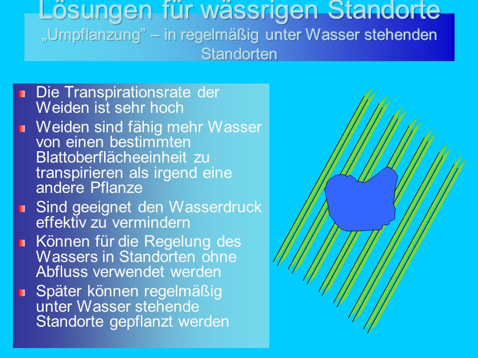 Die Transpirationsrate der Weiden ist sehr hoch Weiden sind fähig mehr Wasser von einen bestimmten Blattoberflächeeinheit zu transpirieren als irgend