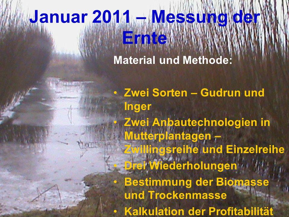 Januar 2011 – Messung der Ernte Material und Methode: Zwei Sorten – Gudrun und Inger Zwei Anbautechnologien in Mutterplantagen – Zwillingsreihe und Ei