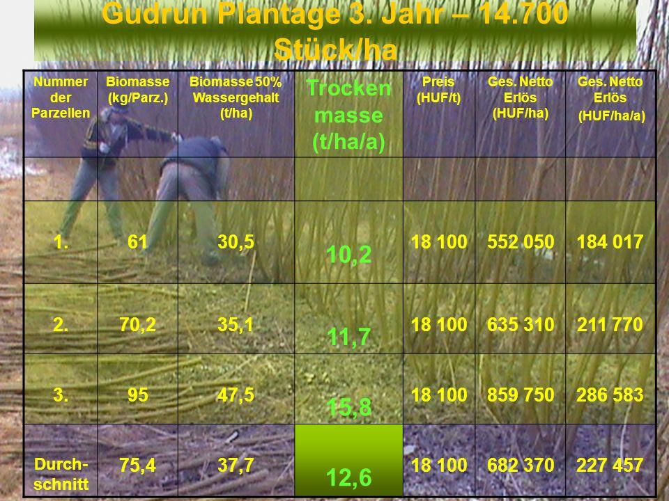 Gudrun Plantage 3. Jahr – 14.700 Stück/ha Nummer der Parzellen Biomasse (kg/Parz.) Biomasse 50% Wassergehalt (t/ha) Trocken masse (t/ha/a) Preis (HUF/