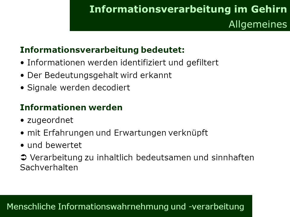 Informationsverarbeitung im Gehirn Allgemeines Informationsverarbeitung bedeutet: Informationen werden identifiziert und gefiltert Der Bedeutungsgehal