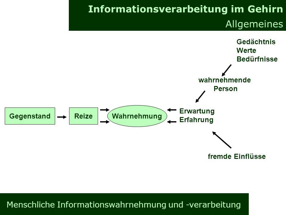 Informationsverarbeitung im Gehirn Allgemeines Informationsverarbeitung im Gehirn Allgemeines Gegenstand wahrnehmende Person Gedächtnis Werte Bedürfnisse fremde Einflüsse Erwartung Erfahrung Wahrnehmung Reize