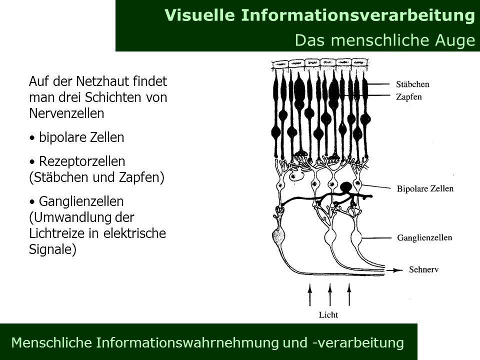 Menschliche Informationswahrnehmung und -verarbeitung Informationsverarbeitung im Gehirn Allgemeines Visuelle Informationsverarbeitung Das menschliche Auge Auf der Netzhaut findet man drei Schichten von Nervenzellen bipolare Zellen Rezeptorzellen (Stäbchen und Zapfen) Ganglienzellen (Umwandlung der Lichtreize in elektrische Signale)