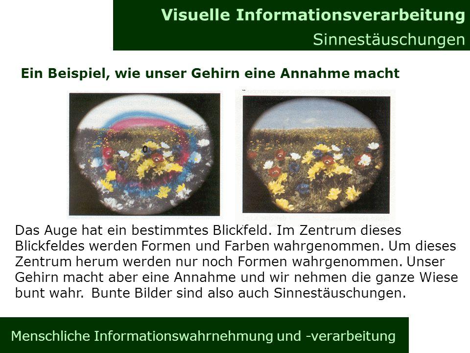 Menschliche Informationswahrnehmung und -verarbeitung Informationsverarbeitung im Gehirn Allgemeines Visuelle Informationsverarbeitung Sinnestäuschung