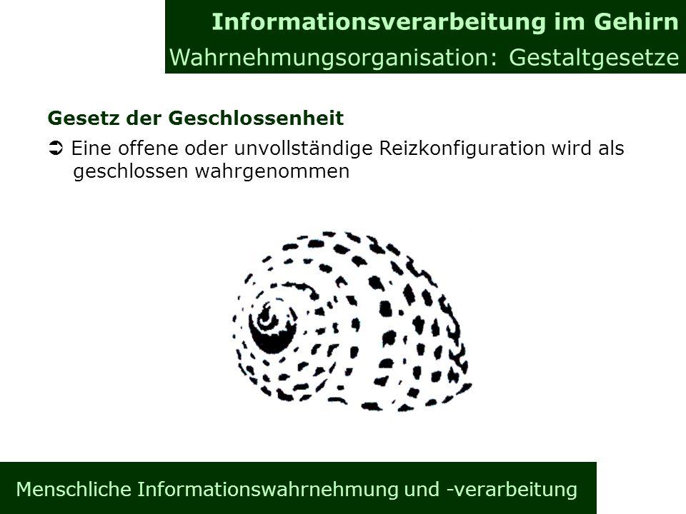 Menschliche Informationswahrnehmung und -verarbeitung Gesetz der Geschlossenheit Eine offene oder unvollständige Reizkonfiguration wird als geschlosse