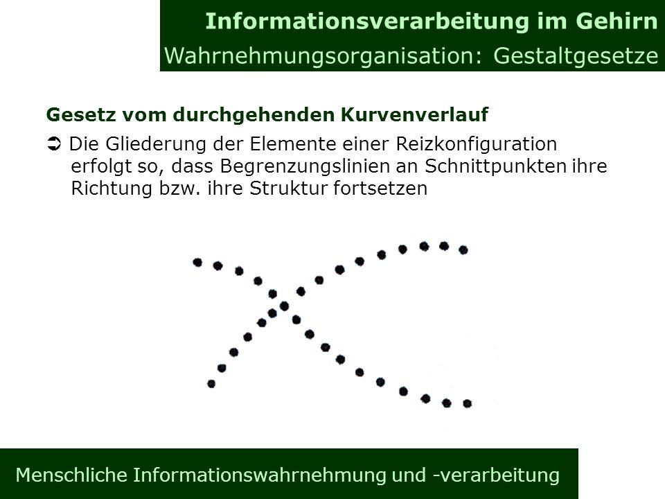 Menschliche Informationswahrnehmung und -verarbeitung Gesetz vom durchgehenden Kurvenverlauf Die Gliederung der Elemente einer Reizkonfiguration erfolgt so, dass Begrenzungslinien an Schnittpunkten ihre Richtung bzw.