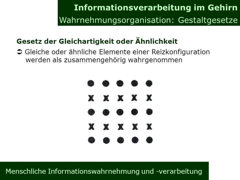 Menschliche Informationswahrnehmung und -verarbeitung Gesetz der Gleichartigkeit oder Ähnlichkeit Gleiche oder ähnliche Elemente einer Reizkonfigurati