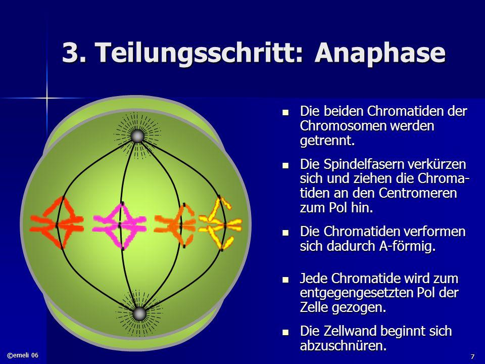 ©emeli 06 7 3. Teilungsschritt: Anaphase Die beiden Chromatiden der Chromosomen werden getrennt. Die beiden Chromatiden der Chromosomen werden getrenn
