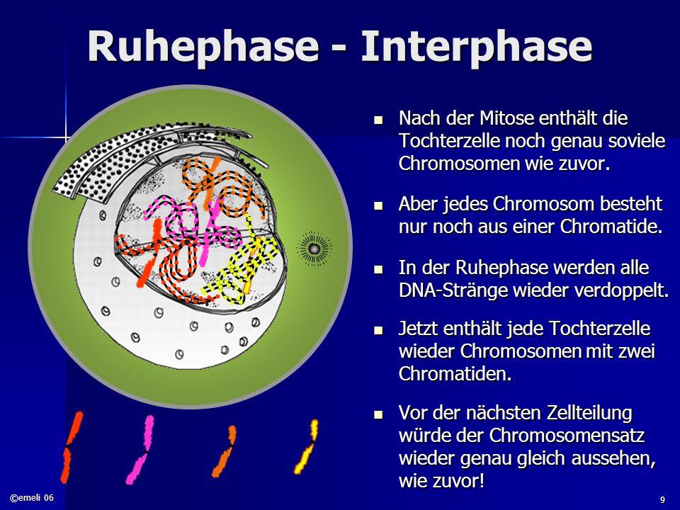 ©emeli 06 9 Ruhephase - Interphase Nach der Mitose enthält die Tochterzelle noch genau soviele Chromosomen wie zuvor. Nach der Mitose enthält die Toch