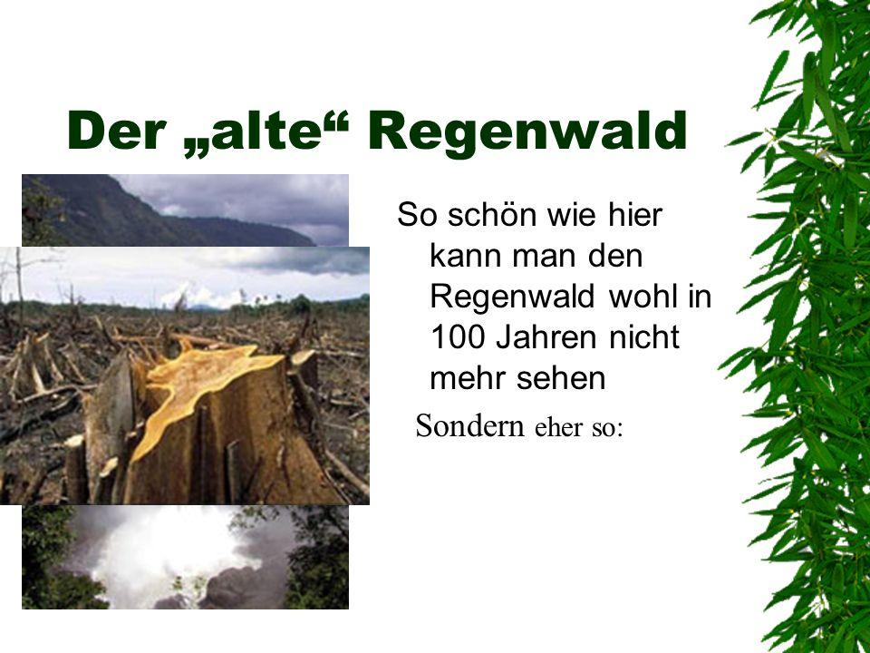 Der alte Regenwald So schön wie hier kann man den Regenwald wohl in 100 Jahren nicht mehr sehen Sondern eher so: