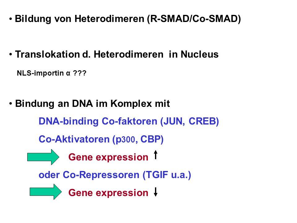 Bildung von Heterodimeren (R-SMAD/Co-SMAD) Translokation d. Heterodimeren in Nucleus NLS-importin α ??? Bindung an DNA im Komplex mit DNA-binding Co-f