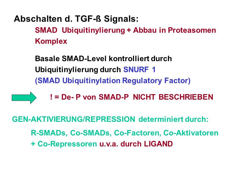 Abschalten d. TGF-ß Signals: SMAD Ubiquitinylierung + Abbau in Proteasomen Komplex Basale SMAD-Level kontrolliert durch Ubiquitinylierung durch SNURF