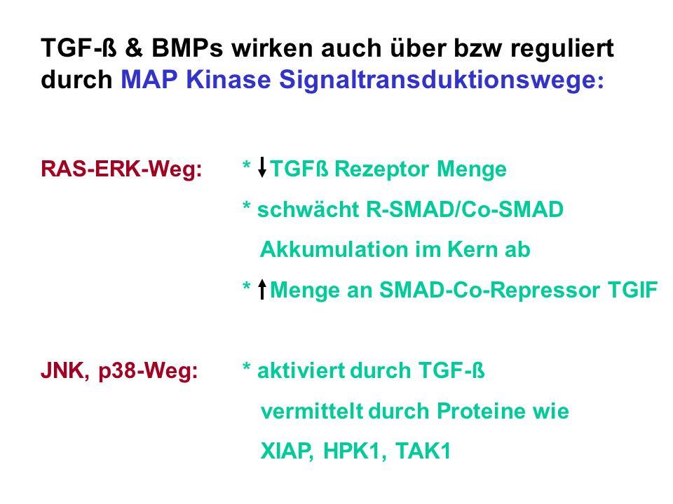 TGF-ß & BMPs wirken auch über bzw reguliert durch MAP Kinase Signaltransduktionswege : RAS-ERK-Weg:* TGFß Rezeptor Menge * schwächt R-SMAD/Co-SMAD Akk