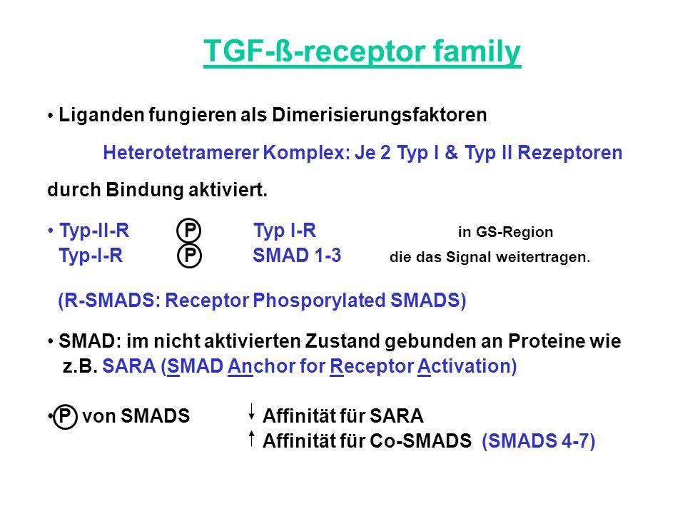 TGF-ß-receptor family Liganden fungieren als Dimerisierungsfaktoren Heterotetramerer Komplex: Je 2 Typ I & Typ II Rezeptoren durch Bindung aktiviert.