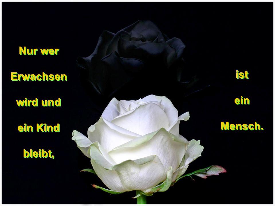 Die Lust ist die Mutter des Wünschens Die Lust ist die Mutter des Wünschens und damit eine der Großmütter des Denkens.