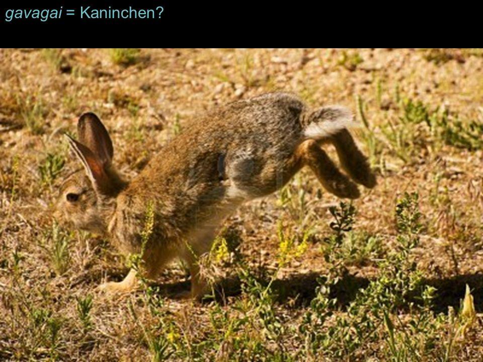 gavagai = Kaninchen?