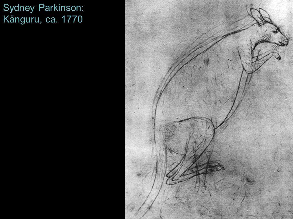 Sydney Parkinson: Känguru, ca. 1770
