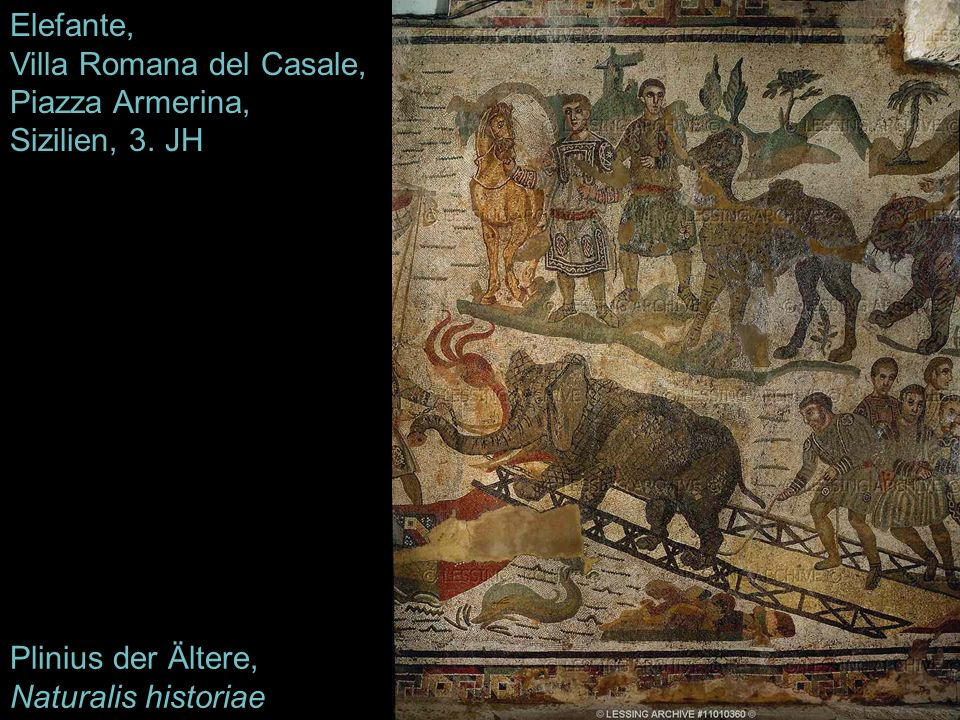 Elefante, Villa Romana del Casale, Piazza Armerina, Sizilien, 3. JH Plinius der Ältere, Naturalis historiae