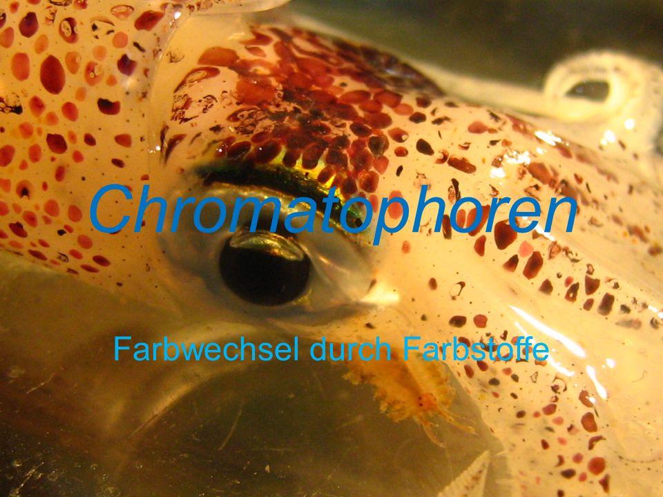 Chromatophoren Farbwechsel durch Farbstoffe