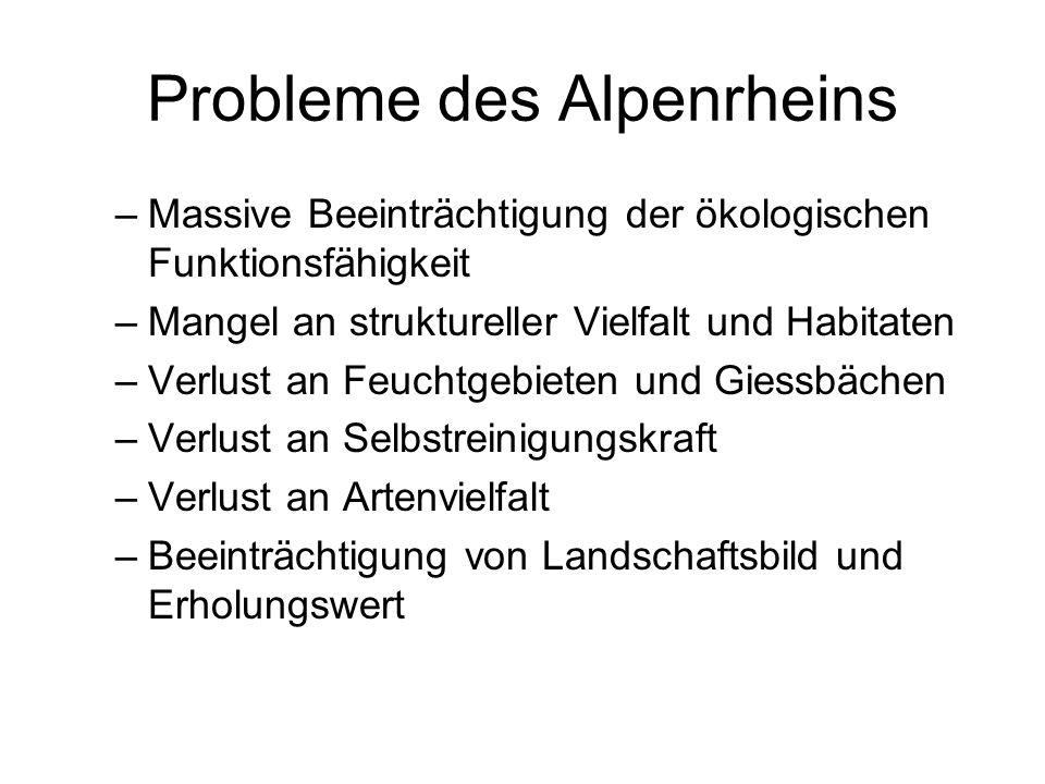 Probleme des Alpenrheins –Massive Beeinträchtigung der ökologischen Funktionsfähigkeit –Mangel an struktureller Vielfalt und Habitaten –Verlust an Feu