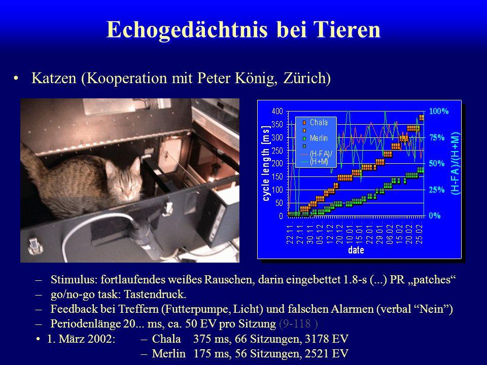 Echogedächtnis bei Tieren Wüstenrennmäuse (Kooperation mit Holger Schulze, Magdeburg) Naive Tiere (N=21, 4 pro Gruppe): –shuttle box, go/no-go task –P