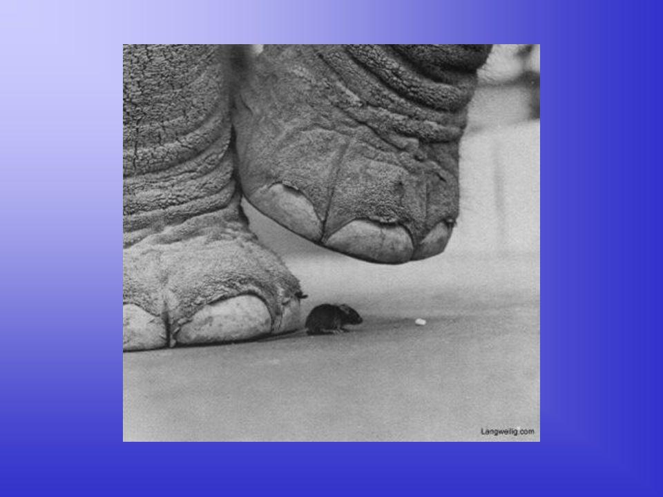 Die Maus Die Maus hat es da schon leichter, sie ist so klein, dass sie irgendwo drunter kriechen kann...