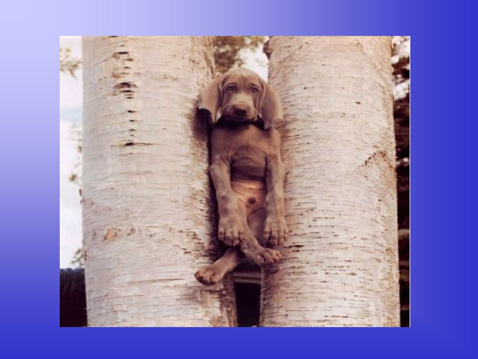 Der Hund Der Hund, der ein besonderes Verhältnis zu Bäumen hat, versucht sich natürlich dort zu verstecken...