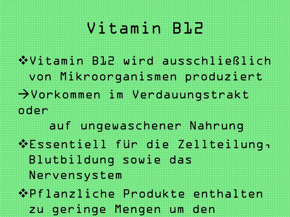 Vitamin B12 Vitamin B12 wird ausschließlich von Mikroorganismen produziert Vorkommen im Verdauungstrakt oder auf ungewaschener Nahrung Essentiell für