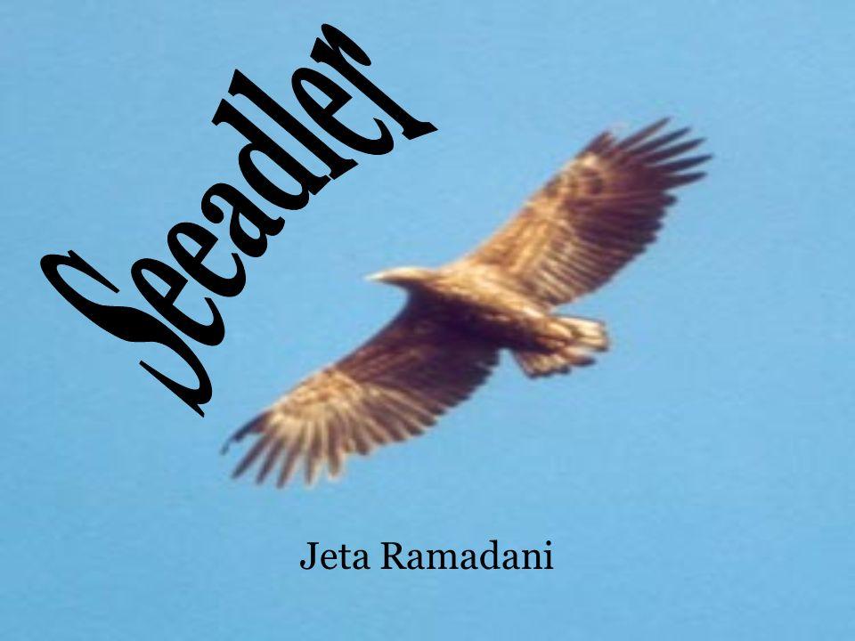 Jeta Ramadani