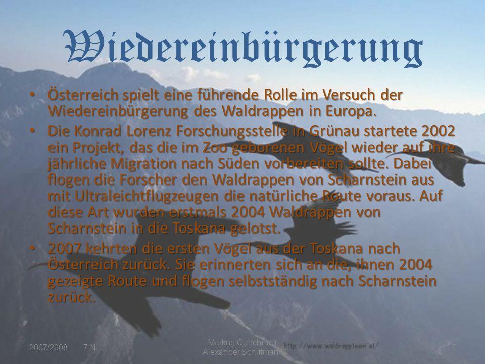 Wiedereinbürgerung Österreich spielt eine führende Rolle im Versuch der Wiedereinbürgerung des Waldrappen in Europa.