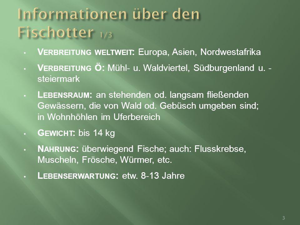 V ERBREITUNG WELTWEIT : Europa, Asien, Nordwestafrika V ERBREITUNG Ö: Mühl- u.