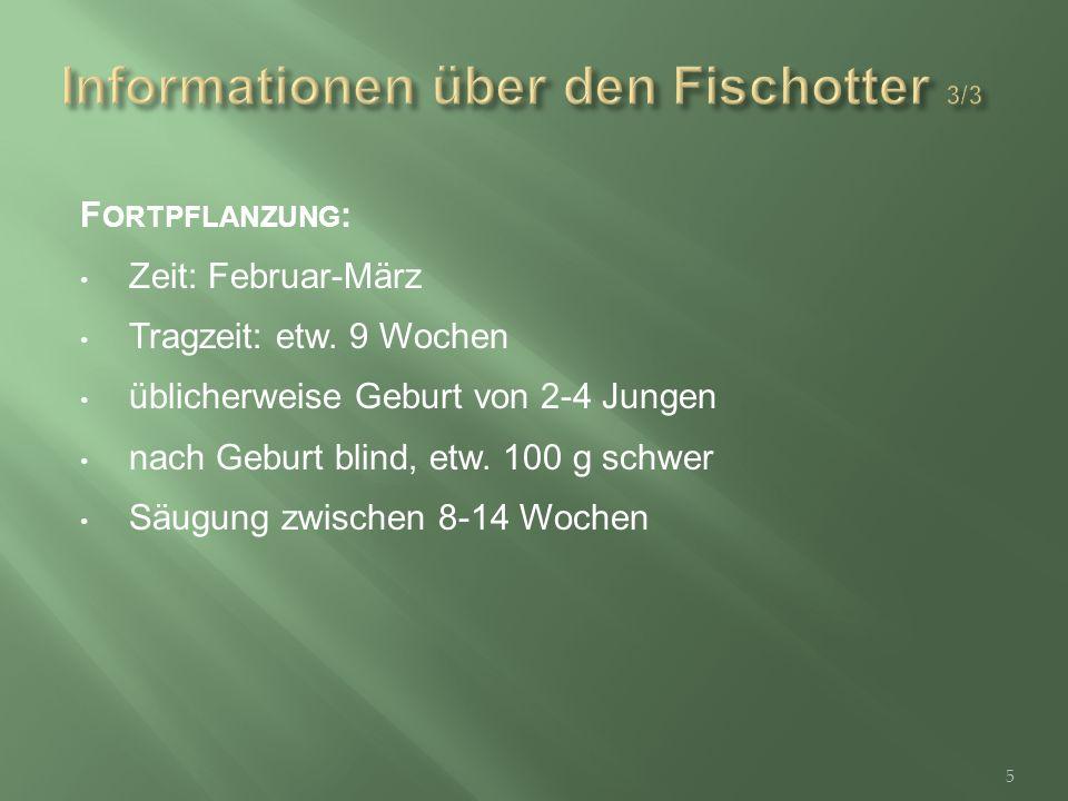 F ORTPFLANZUNG : Zeit: Februar-März Tragzeit: etw.