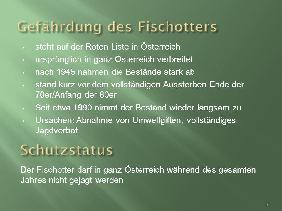 steht auf der Roten Liste in Österreich ursprünglich in ganz Österreich verbreitet nach 1945 nahmen die Bestände stark ab stand kurz vor dem vollständigen Aussterben Ende der 70er/Anfang der 80er Seit etwa 1990 nimmt der Bestand wieder langsam zu Ursachen: Abnahme von Umweltgiften, vollständiges Jagdverbot Der Fischotter darf in ganz Österreich während des gesamten Jahres nicht gejagt werden 6