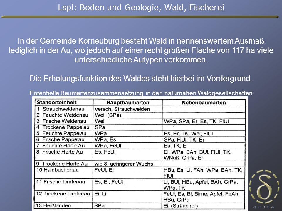 In der Gemeinde Korneuburg besteht Wald in nennenswertem Ausmaß lediglich in der Au, wo jedoch auf einer recht großen Fläche von 117 ha viele unterschiedliche Autypen vorkommen.