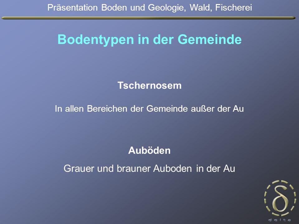 Bodentypen in der Gemeinde Auböden Grauer und brauner Auboden in der Au Präsentation Boden und Geologie, Wald, Fischerei Tschernosem In allen Bereichen der Gemeinde außer der Au
