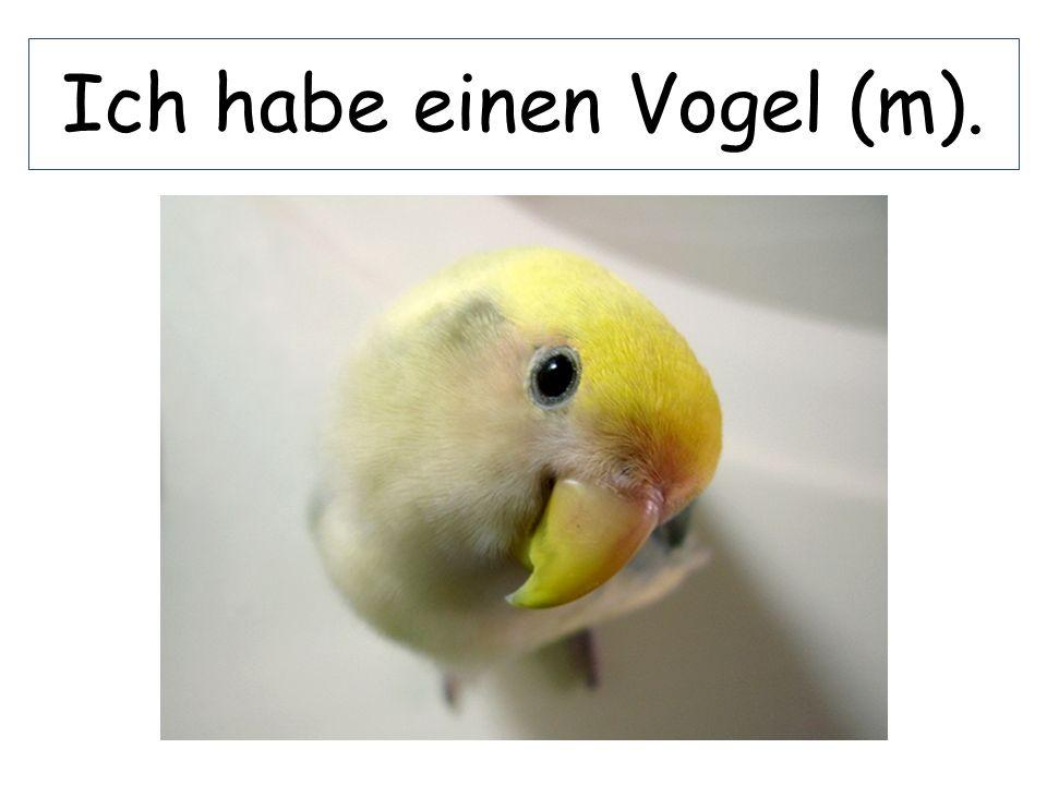 Ich habe einen Vogel (m).