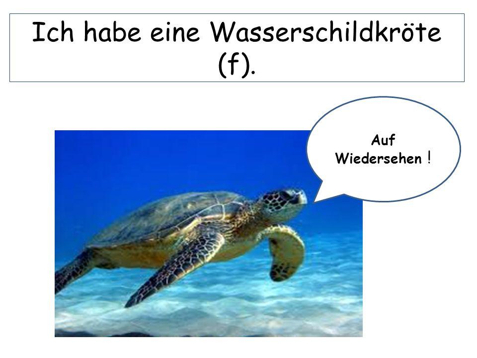 Ich habe eine Wasserschildkröte (f). Auf Wiedersehen !