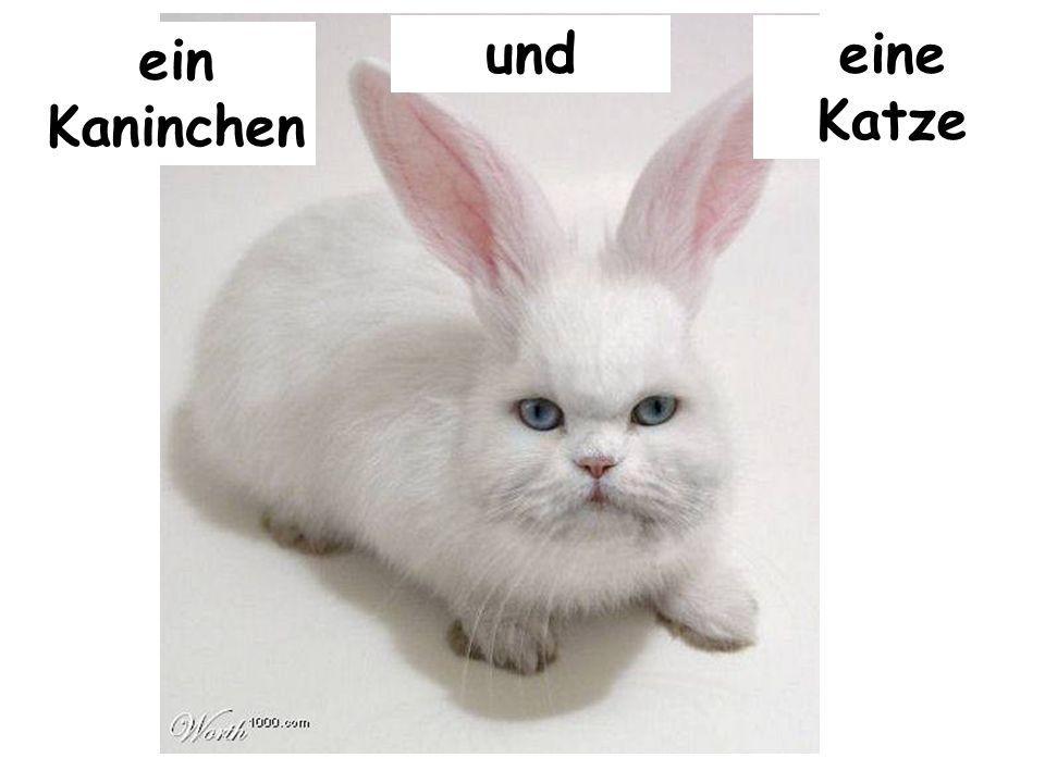ein Kaninchen undeine Katze