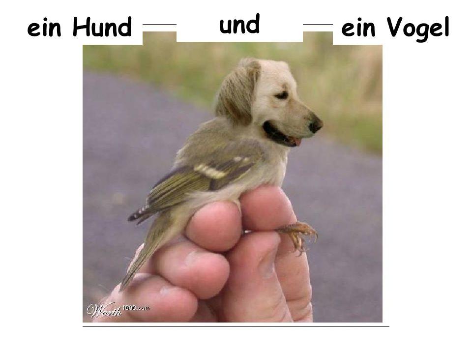 ein Hund und ein Vogel