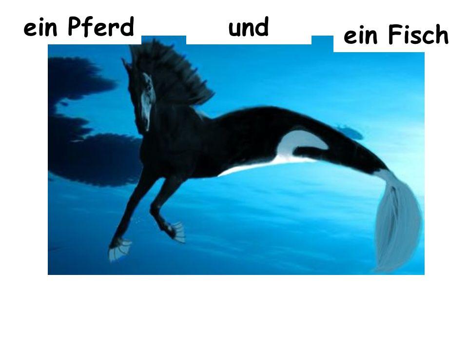 ein Pferdund ein Fisch