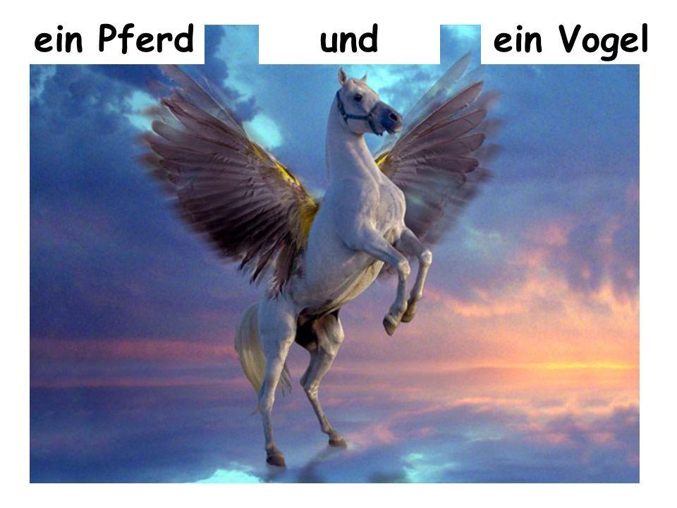 ein Pferdundein Vogel