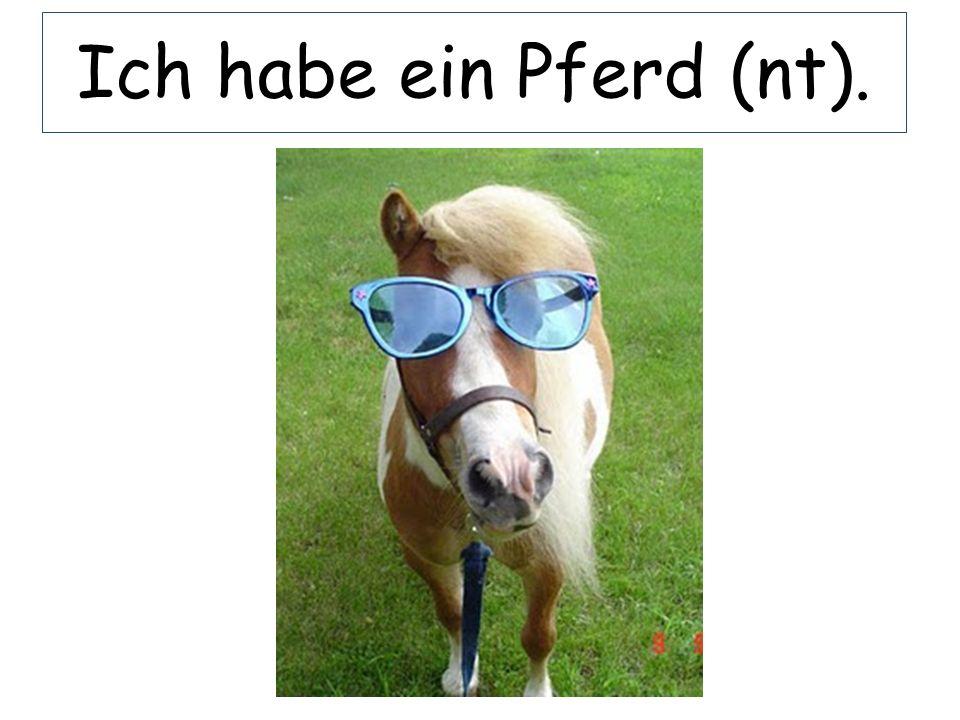 Ich habe ein Pferd (nt).