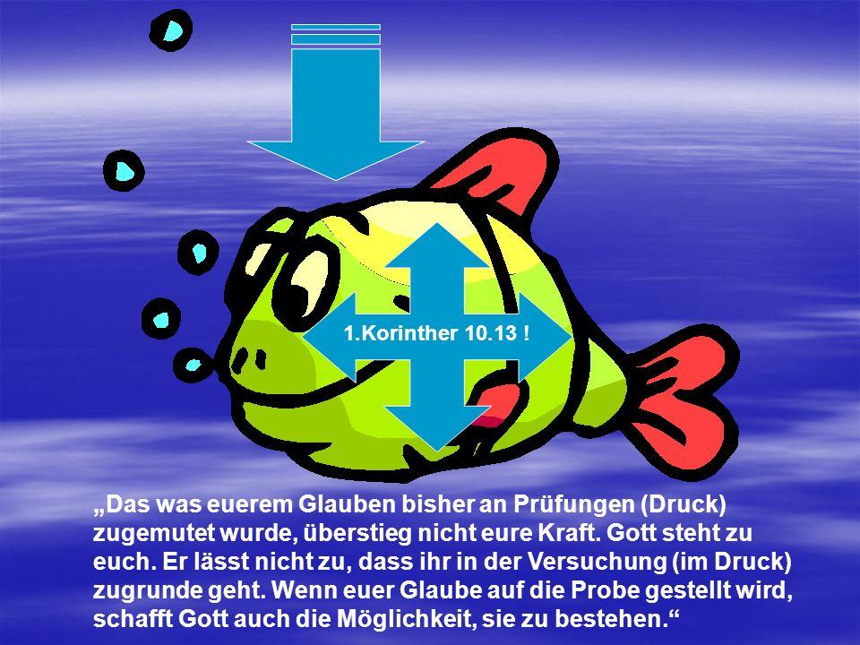 EE-Süddeutschland EE-Süddeutschland Pastor Ulrich Hees Pastor Ulrich Hees Brieger Straße 25 Brieger Straße 25 80997 München 80997 München Tel.