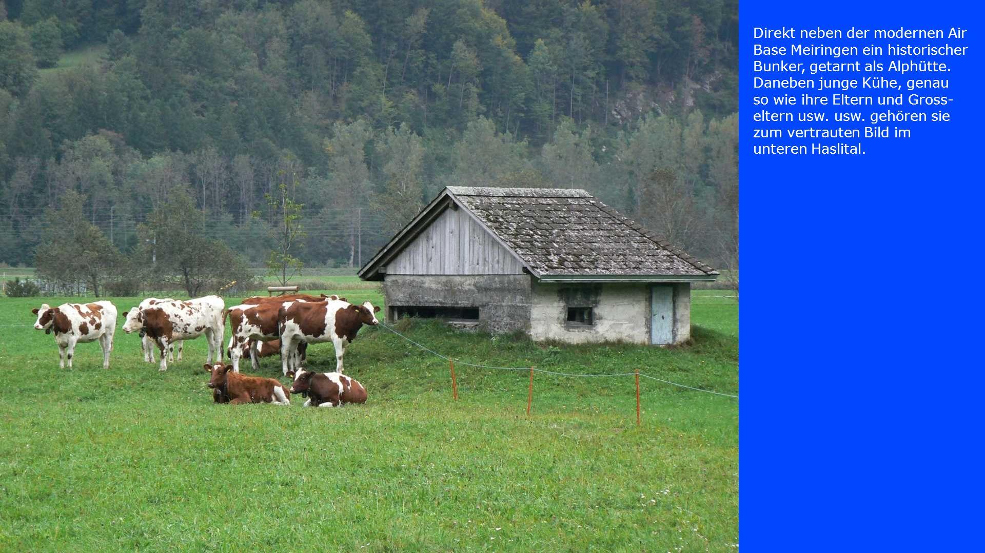 Direkt neben der modernen Air Base Meiringen ein historischer Bunker, getarnt als Alphütte. Daneben junge Kühe, genau so wie ihre Eltern und Gross- el