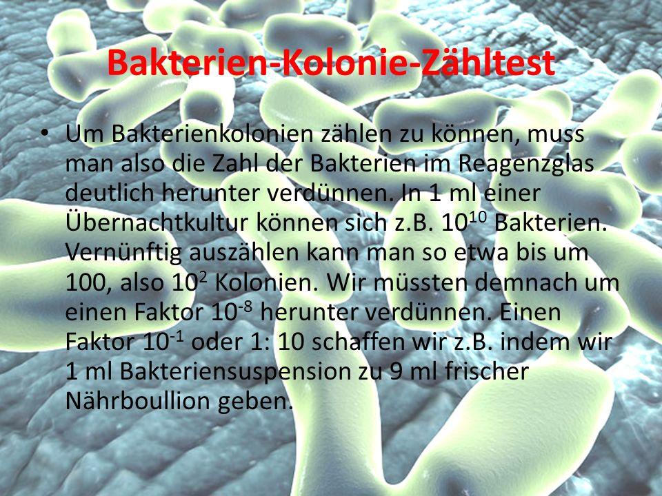 Bakterien-Kolonie-Zähltest Um Bakterienkolonien zählen zu können, muss man also die Zahl der Bakterien im Reagenzglas deutlich herunter verdünnen.