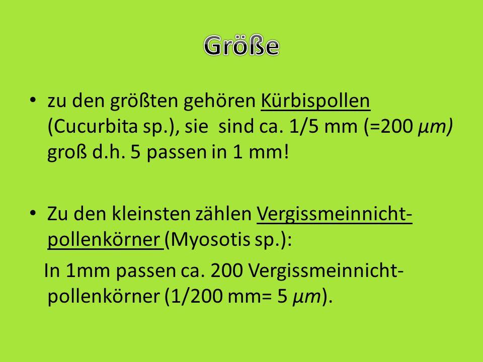 Myosotis nemorosa (Boraginaceae) Cucurbita ficifolia (Cucurbitaceae) Pinus nigra (Pinaceae)