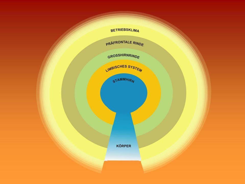 1.Das Gehirn ist eine Baustelle 2.Subjektive Bewertungen sind entscheidend 3.Gefühle sind wichtig 4.Erfahrungen hinterlassen Spuren 5.Das Gehirn ist ein soziales Konstrukt 6.Das Bedürfnis über sich hinauszuwachsen und verbunden zu bleiben ist im Gehirn verankert